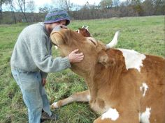 Saying Goodbye to Bill and Lou, Green Mountain College's Beloved Oxen (Article on the realities of being a sustainable farmer and a compassionate meat eater)