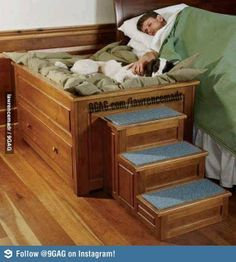 Image result for human pet beds