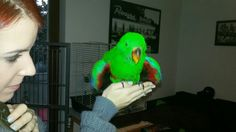 Young parrot is going to fly :)