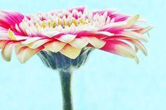 Flower Photography Wall Art Daisy Print 15x10 by KornflakeStew, £21.40