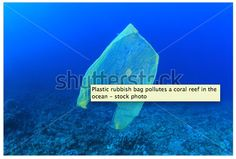 http://www.shutterstock.com/pic-108881033/stock-photo-plastic-rubbish-bag-pollutes-a-coral-reef-in-the-ocean.html?src=same_artist-75808879-7