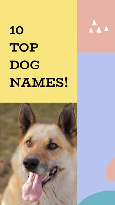 Top Dog Names, Cute Names For Dogs, Best Dog Names, Cute Girl Puppy Names, Cute Animal Names, Cute Little Puppies, Cute Puppies, Unique Female Dog Names, Baby Animals Super Cute
