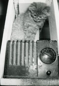"Unknown photographer, ""Radio and Cat,"" ca. 1940. Source: Wisconsin Historical Society."