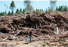 A forester provides context for the size of slash piles.