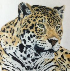 Chiquita - Coloured Pencil Drawing