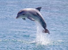 dolphins are warm blooded animals and live all over the world, most avoid the cold waters of the Arctic, but there is a species for every ocean