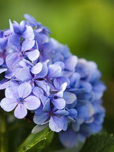 """""""Podrán cortar todas las flores, pero no podrán detener la primavera"""". -Pablo Neruda"""