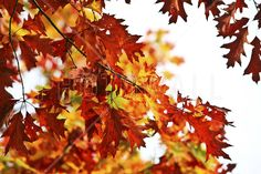 Red and Yellow Leaves - Fototapeter & Tapeter - Photowall
