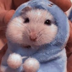 Cute Animal Names, Cute Animal Photos, Funny Animal Pictures, Super Cute Animals, Cute Little Animals, Cute Funny Animals, Hamster Pics, Funny Hamsters, Hamsters As Pets
