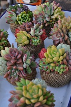Succulents sitting in string balls