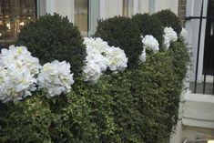 Window Box Ideas: Window Box Style - elegant white and green