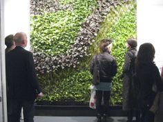 Indoor Living Walls Vertical Gardens   Vertical Gardens, Green Roofs, Plant  Walls U0026 Urban
