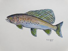 Arctic Grayling original painting by Goohsnest on Etsy. This would make a nice gift for a serious fly fisherman.