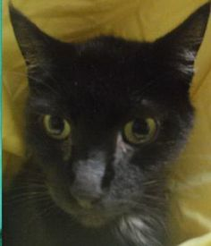 After the help ER4PETS gave him, Zoe is ready for his new home!
