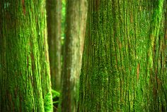 Community Post: 28 Gorgeous Photos Of Moss