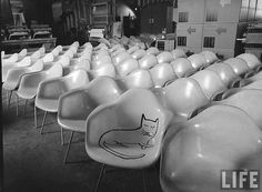 Eames Cat. Drawing by cartoonist Saul Steinberg (1950). Photography by Peter Stackpole. From the LIFE Photo Archives (hosted by Google) via Flickr.