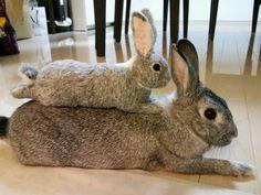 bunny and Felting bunny ♥ | YOSHiNOBU 羊毛フェルトでつくる動物