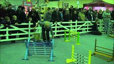 Burgess Excel Small Animal Show Rabbit Grand National