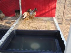 So after all the snow and mud went away we were able to get up one set of our call duck breeding pens this past week. Raising Ducks, Raising Chickens, Chicken Pen, Chicken Coops, Duck Pens, Duck Breeds, Duck Or Rabbit, Duck Coop, Tin Shed