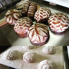 #campagne #カンパーニュ #naturalyeast #wildflour #levain #hop #raisin #ゆめかおり #designcoop #boulangelie #ordinary #bread #brot #pain  #yummy ⭐⭐⭐