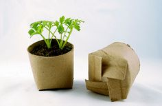 Reuse cardboard tubes to sprout seeds.