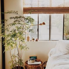 plants and natural light