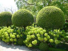 Topîaires laurier du Portugal - Parc de SCEAUX (FRANCE)