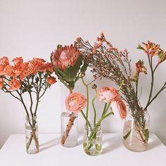 blooms on blooms