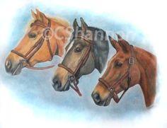 Horse portrait drawn in colour x Horse Portrait, Horse Drawn, Pet Portraits, How To Draw Hands, Horses, Colour, Pets, Gallery, Artist