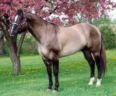 """Unique Horse Colors -  This was the color of my horse """"Star""""."""
