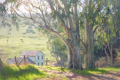 """Basking Eucalyptus"" fine art edition by June Carey sends me California dreamin'"