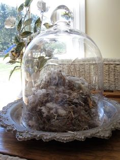 """This is what I need to do with the Birds Nest I found under our Maple Tree.display it under a Glass Cloche!"" Perhaps add small silver framed pic of bird. Glass Globe, Glass Domes, Glass Jars, The Bell Jar, Bell Jars, Garden Cloche, Living Room Redo, Silver Trays, My Secret Garden"