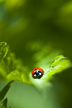 There were ladybugs everywhere on the day of our wedding. Good luck bugs! <3