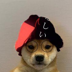 Dog Icon, Nba Wallpapers, Hypebeast Wallpaper, Mug Shots, Doge, Memes, Avatar, Pup, Cute Animals