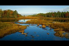 Near Bar Harbor in Early October. Photographer Sheila Reeves
