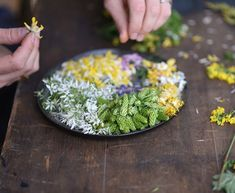 We spent all morning yesterday foraging through fields and forests for these wild herbs and edible flowers. I combined them in a tasty salad. Edible Flowers, Food Waste, Forests, Vintage Kitchen, Instagram Feed, Fields, Tasty, Herbs, Salad