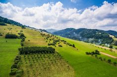 Free Image: Wonderful Hills Scenery with Green Grass and Trees | Download more on picjumbo.com!