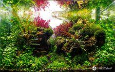 Morocco naure aquarium 48cm