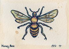 Honey Bee Scientific Classification Print   ... bee (above) was most successful, while the honey bee (below) was least