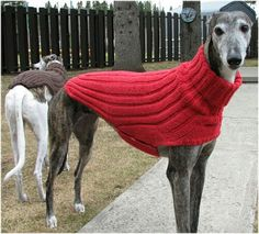 Ravelry: Side Button Greyhound Sweater pattern by Terri Lee Royea Knitting Patterns For Dogs, Crochet Dog Sweater Free Pattern, Dog Coat Pattern, Knit Dog Sweater, Greyhound Coat Pattern, Dog Crochet, Large Dog Sweaters, Pet Sweaters, Italian Greyhound Clothes