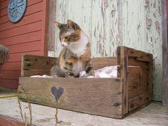 un lit pour chat en palettes