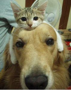 Cat Dog!