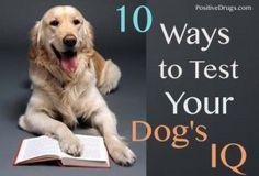 10 Ways to Test your Dog's IQ