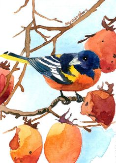 ACEO Limited Edition - Baltimore oriole in persimmon tree