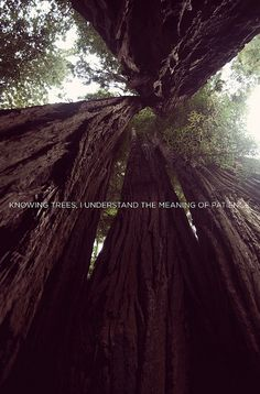 077(10.9.11) by ashlynne.herrin, via Flickr. Knowing trees, i understand the meaning of patience.