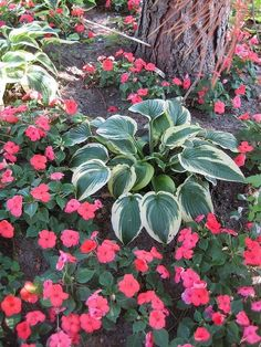Shade gardening by abbyy