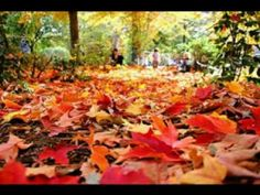 Bing Images, Pumpkin, Plants, Outdoor, Autumn Leaves, Outdoors, Buttercup Squash, Pumpkins, Flora