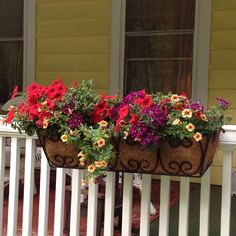Doing this with our old window boxes. Front Porch Flowers ...