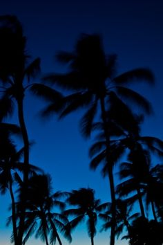 Wallpaper palm trees palm tree wallpaper by palm trees iphone Palm Tree Iphone Wallpaper, Apple Logo Wallpaper Iphone, Tumblr Wallpaper, Photo Wallpaper, Palm Trees Tumblr, Everything Is Blue, Pantone 2020, Blue Aesthetic, Life Photo