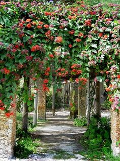 Fairchild Tropical Botanic Garden (Coral Gables, Florida) - Among its gems are…